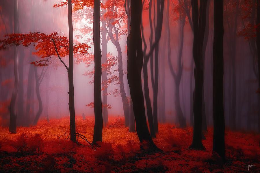 -Where no words needed- by Janek-Sedlar