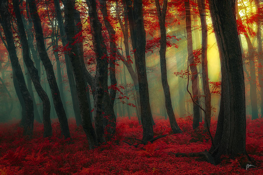 -Forest conjuration- by Janek-Sedlar