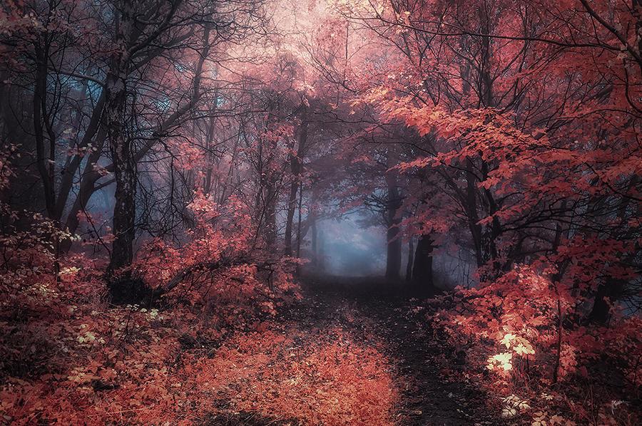 -Chasing vision- by Janek-Sedlar