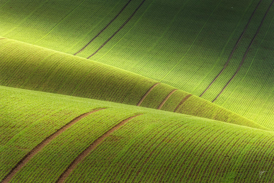 -On the green carpet- by Janek-Sedlar