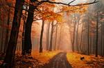 -Secrecy of autumn roads-