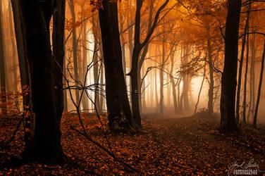 -Soft veil of mystery- by Janek-Sedlar