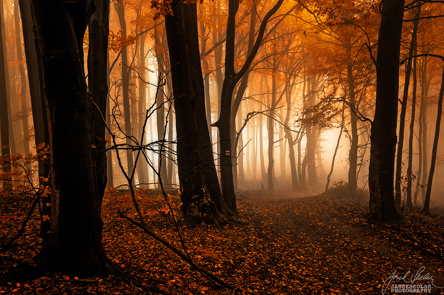 -Soft veil of mystery- by Janek-Sedlar