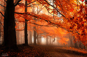 -Kingdom of silence- by Janek-Sedlar