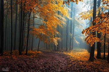 -Hidden beneath the leaves- by Janek-Sedlar