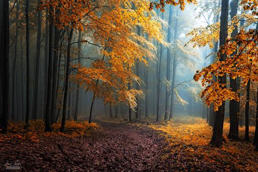 -Hidden beneath the leaves-