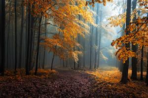 -Hidden beneath the leaves- PRINT by Janek-Sedlar