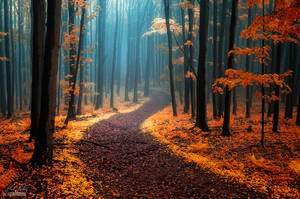 -Call of wandering- by Janek-Sedlar