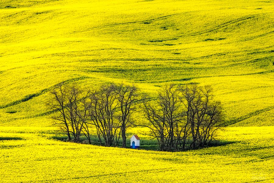 -Sacred fields- by Janek-Sedlar