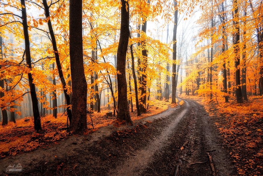 -The path- by Janek-Sedlar