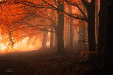 -Carpathian dreaming- by Janek-Sedlar