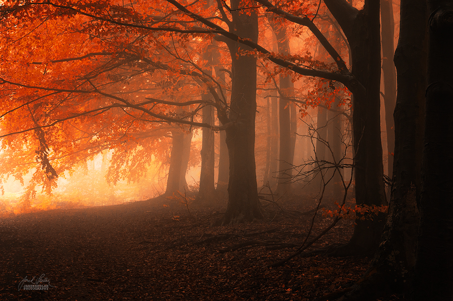 -Carpathian dreaming- by Janek-Sedlar