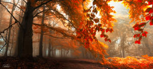 -Carpathian enerigies-