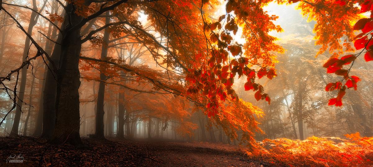 -Carpathian enerigies- by Janek-Sedlar