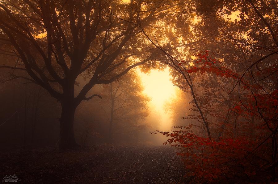 -Inner evening- by Janek-Sedlar