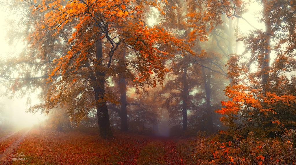 -The road into depths of the soul- by Janek-Sedlar