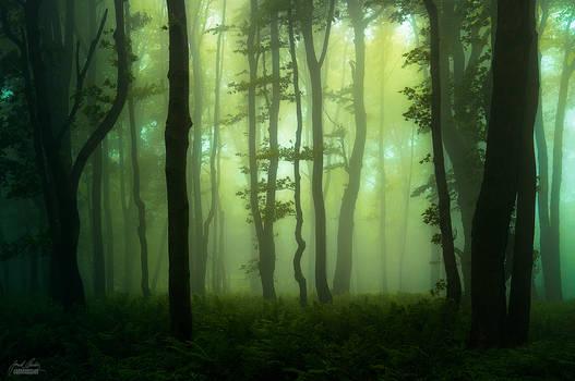 -Forgotten treasure of the woods-