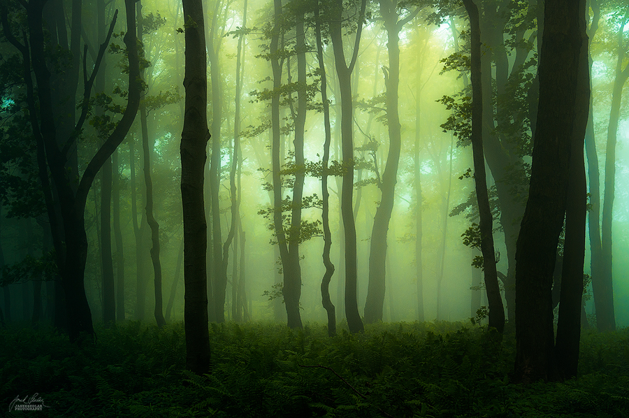 -Forgotten treasure of the woods- by Janek-Sedlar