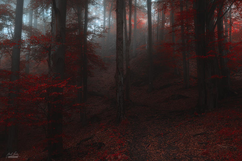 -Inner oath for the woods- by Janek-Sedlar
