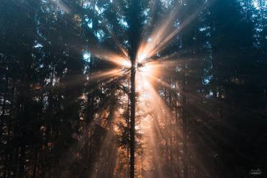 -Morning Enlightenment-