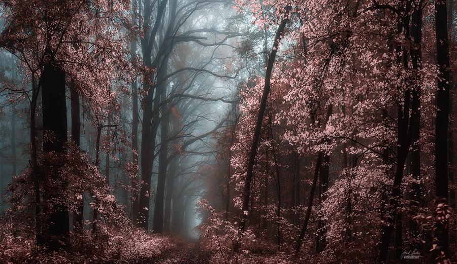 -Forgotten realm- by Janek-Sedlar