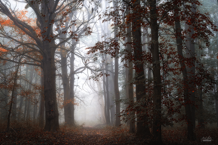 -Autumnal vedas- by Janek-Sedlar