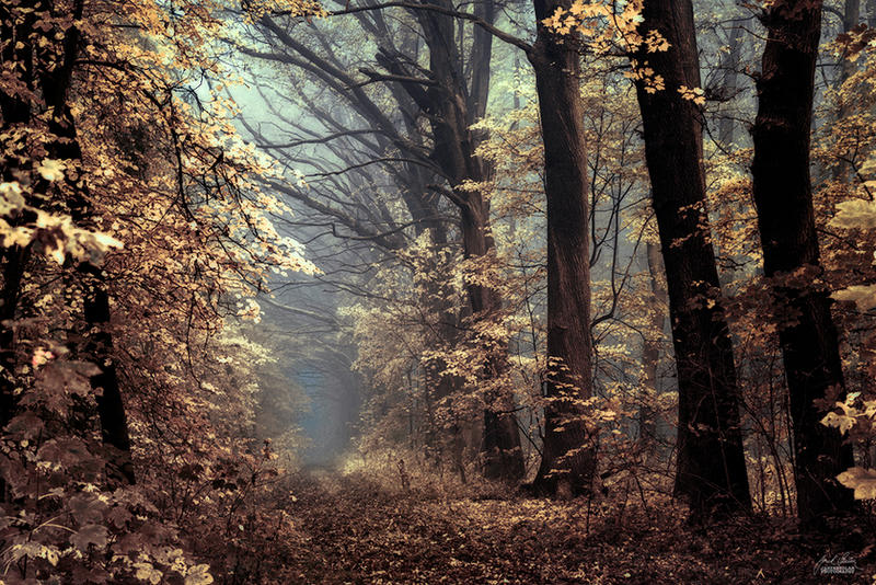 -Angels alongside our path- by Janek-Sedlar