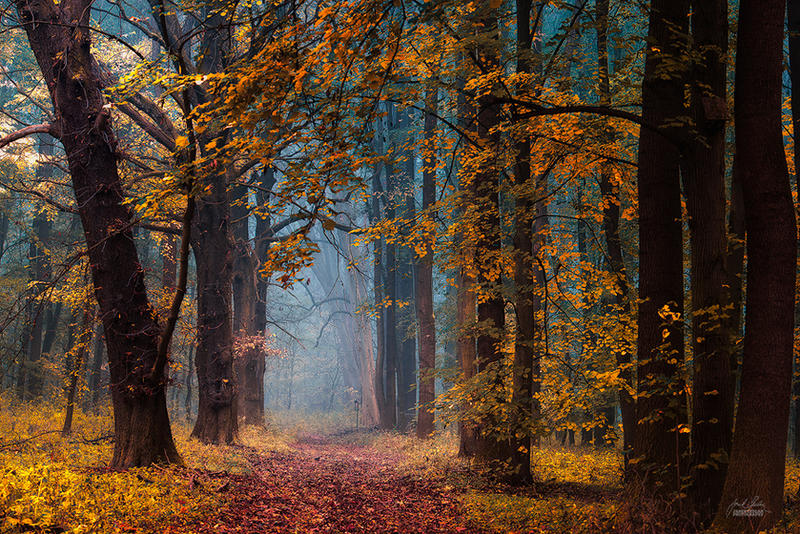 -Under the protection of light- by Janek-Sedlar