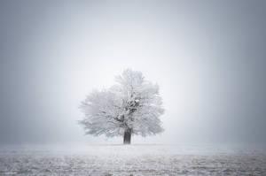 -White solitude and light-