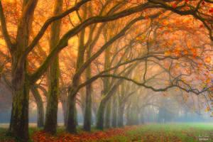 -Hidden memories in fallen leaves-