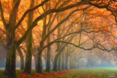 -Hidden memories in fallen leaves- by Janek-Sedlar