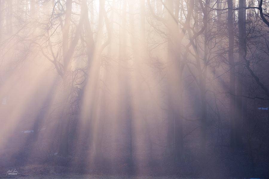 -Blessed morning- by Janek-Sedlar
