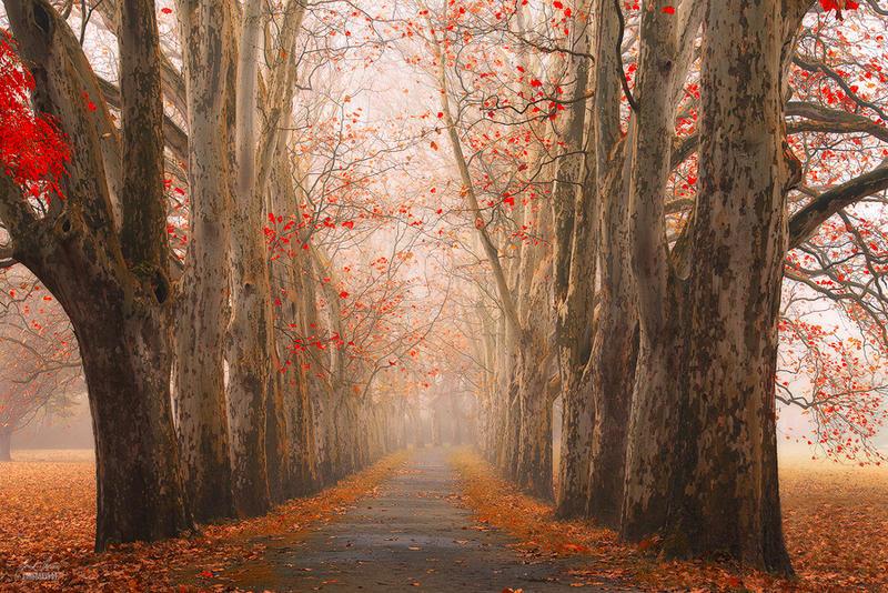 Lane of Elders by Janek-Sedlar