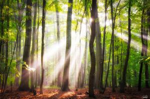 When the sun shine on your way by Janek-Sedlar