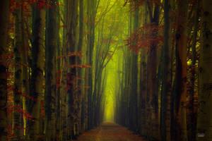 -Portal into the Kingdom of silence- by Janek-Sedlar