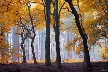 -Ephemeral treasure- by Janek-Sedlar