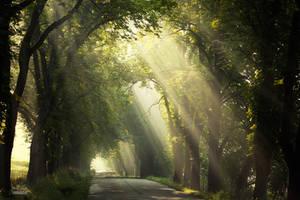 -Morning poetry of light- by Janek-Sedlar
