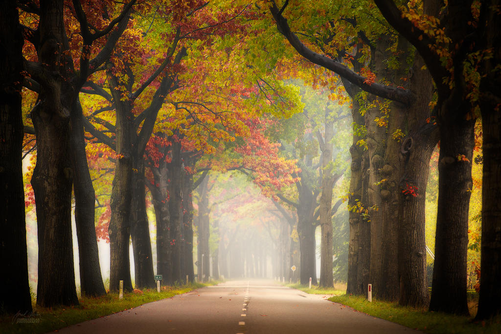 -Pleasure to drive- by Janek-Sedlar