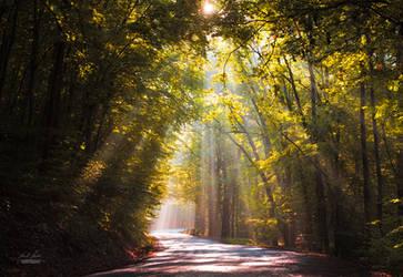 -Road to the Sun- by Janek-Sedlar