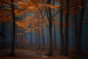 -Forest of rare moments- by Janek-Sedlar