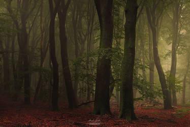 -Forest consciousness-