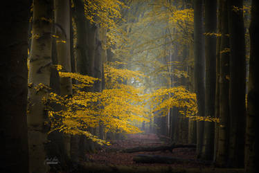 -The yellow gift of the fall- by Janek-Sedlar