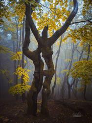 -Forest spirit-