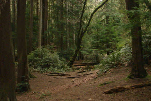 Dense Forest 02