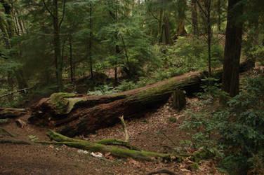 Dense Forest 03