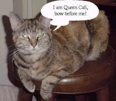 Queen Calli