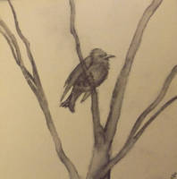 Water soluble graphite bird by InsomniaDoodles