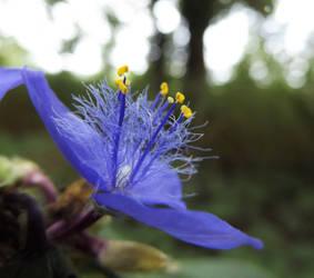 Cliche Flower Macro is Cliche