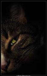 Tiger's Eye by Adarhay