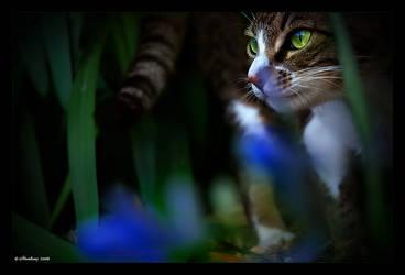 Silent Hunter by Adarhay
